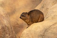 mr Grumpy (CapMarcel) Tags: mr grumpy rack sittiing animal