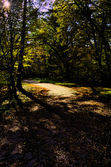 forest path (lucianomandolina) Tags: autumn lombardy herbst lombardei himmel sonne sky sun berge mountains wald grün green italien italia italy alpen als forrest idro garda