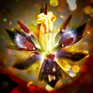 Toronto Ontario ~ Canada ~ Edwards Gardens ~ Botanical Garden ~  Heart of a  Tulip