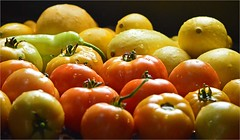 Today's Picking (jasamataz) Tags: tomatoes peppers summer squash water drops garden vegetables