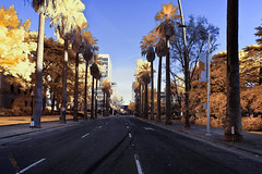 'L Street', Downtown Sacramento, California- Infrared Photography (False Colors) ​ (jc reyes) Tags: travels ir infrared infraredmaster digitalinfrared infraredimages infraredworld infraredphoto irfilter irphotography colorinfrared falsecolors invisiblelight creativeir creativeiramericas creativeireurope iginfrared photography infraredcamera infraredlandscape kolarivision jawdroppingshots epiccaptures igworld nikon nikonphotography nikkor ​