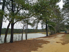 Walking Trail. (dccradio) Tags: lumberton nc northcarolina robesoncounty park citypark lutherbrittpark march spring springtime saturday water bodyofwater lake pond waves ripples outdoor outdoors outside nature natural tree trees greenery grass lawn yard ground trail path walkingtrail walkingpath dirt road sandy sand pineneedles pinestraw treebranch treebranches treelimb treelimbs branch branches shore scenic landscape canon powershot elph 520hs