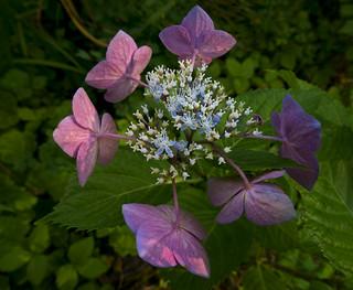 Bursting with Blossom