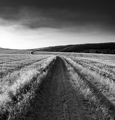 P1000943-2 (BURAGUE) Tags: kraluvdvur czechrepublic country nature trees fileds clouds summer time sunset goldenhour hometown micro43 m43 landscape photography color bw lightroom edits burague myphotographyworld