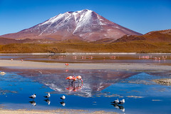 On the paths of the Andes. (Valter Patrial) Tags: laguna hedionda bolívia bo reflex flamingo mountains mountain blue sky lake