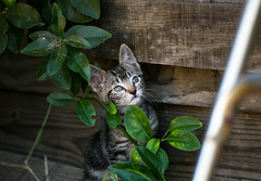 (Chas Smash) Tags: kittens cats feralcats