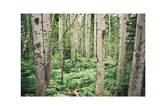 (Julie Stutzman) Tags: contaxt3 color analog film 35mm usa rockies forest nationalparks hiking colorado summer exploring