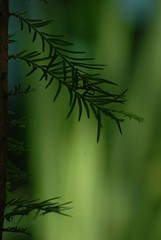 mini forest (courtney065) Tags: nature landscapes green verdant wetland summer foliage flora soft softlight abstract artistic blurred fairyland tree wetlandgrowth branchlets