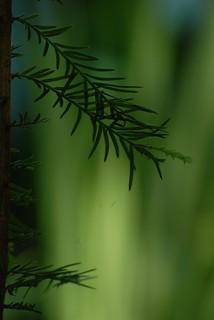 mini forest