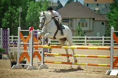 Winston (courier762) Tags: equine equestrian horse horses girl hunter jumper jumping action outdoors sports grey
