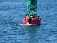 DSC03659 (jrucker94) Tags: juneau alaska cruise cruiseport seal seals buoy ocean inlet red green