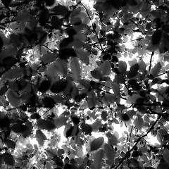 Up Through Trees 049 (noahbw) Tags: captaindanielwrightwoods d5000 dof nikon abstract blackwhite blackandwhite blur branches bw depthoffield forest leaves light monochrome natural noahbw shadow spring square trees woods