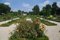 JLF17949 (jlfaurie) Tags: jardin garden bagatelle paris france francia parc parque 22072018 mpmdf jlfr jlfaurie mechas roseraie fleurs roses rosas