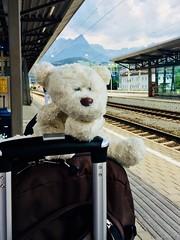 Es geht ein Zug nach Nirgendwo - oder nach Südamerika... Herzliche Glückwünsche, Maelia! (Frau D. aus D.) Tags: österreich trainstation bahnhof maelia cumpleanos geburtstag vacation reise reisen berge eisbär stofftier teddy teddybär