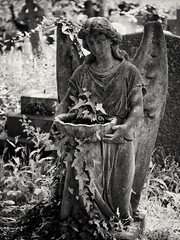 20180518-0087-Edit (www.cjo.info) Tags: 19thcentury 19thcenturyneogothic bw england europe europeanunion highgate highgatecemetery highgatecemeteryeast london m43 magnificent7 magnificentseven magnificentsevengardencemeteries microfourthirds nikcollection olympus olympuspenfgzuikoautos40mmf14 olympuspenf penfmount silverefexpro silverefexpro2 unitedkingdom victoriangothic westerneurope angel animal architecture art blackwhite blackandwhite blur bokeh carving cemetery classiclens climbingplant death decay digital fauna flora focusblur girl gothic gothicrevival gravegraveyard ivy legacylens manualfocus monochrome mythicalcreatures overgrown people plant sculpture shallowdepthoffield statue stone stonework victorian wing wingedcreature woman