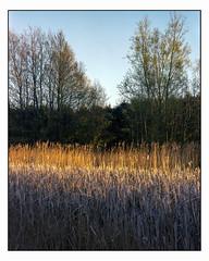 May 5th - 4x5 (magnus.joensson) Tags: sweden skåne spring marsh may sunset large format 4x5 intrepid camera voigtlander heliar 21cm f45 kodak porta exp laboratoriet epson v800 scan