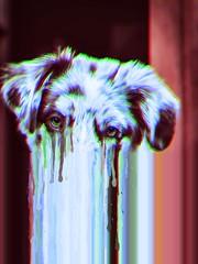 Cry Of Fear (wiedemannmaximilian) Tags: fuckedup lost dream cover drugs artistic art australienshepherd horror dark dog fear cry