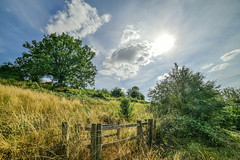 Back from a bird shoot (Paul Wrights Reserved) Tags: landscape landscapes landscapephotography tree trees gate sun skyscape cloudscape clouds cloud