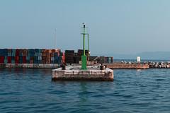 Moj_galebe (Rijeka u slikama) Tags: rijeka croatia port seagull galeb pentaxk7 hrvatska