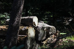Maine2018_7 (paul.imburgia) Tags: maine bar harbor mount desert island nature travel photography oceanview oceanscape landscape 2018 august new england northeast paul imburgia black white color