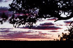 Zion 2018-054_ILCE-7RM3-85 mm-180528_180528-ILCE-7RM3-85 mm-194346__STA5176 (Staufhammer) Tags: sony sonya7riii a7riii sonyalpha sony1635mmf28gm sony1635mm sonygm sony85mmf18 zion nationalparks nationalpark zionnationalpark grandcanyon landscape alphashooters travel valley fire state park valleyoffire valleyoffirestatepark