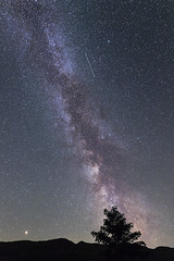 Milky Way Tree (gmorriswk) Tags: milky way mars perseids perseid meteor shower astro exposure long landscape
