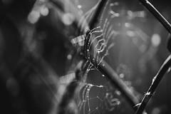 mesh on mesh... (Jess Feldon) Tags: hmm macromondays mesh macro blackandwhite web spidersweb nature jessfeldon lookslikefilm bokeh dof fence