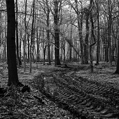 superikonta532016 (salparadise666) Tags: zeiss ikon super ikonta tessar fuji neopan caffenol nils volkmer landscape rural nature black white monochrome tree vintage folding medium format film camera 6x6 square wood forest hannover region niedersachsen germany