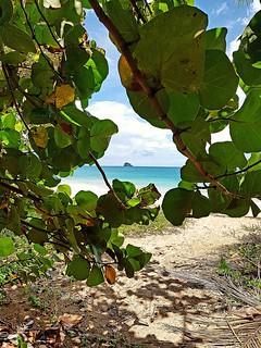 Sweet paradise #Guadeloupe #sainterose #plagedelaperle #beach #sea #sand #raisinierborddemer #Guadeloupeforever #carribeanbeach #carribeancolours #carribeanlifestyle #sky #sunnybeach #home #beautyofnature #beautyofislands #travel #trip #placetogo #placeto