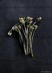 """Edible wild plants """"WARABI"""" (Katsushige Bon Terada) Tags: warabi edibleplants ediblewildplants edible"""