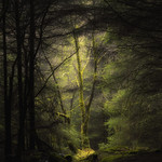 The Faerie Glade thumbnail