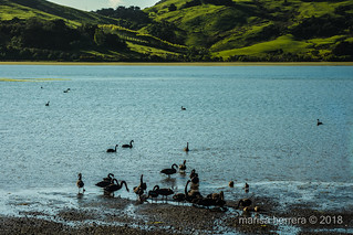 2017. Otago peninsula.
