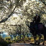 The Witcher 3: Wild Hunt / White Blossom thumbnail