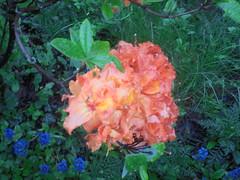 285 (en-ri) Tags: fiori flowers alberello verde rosa sony sonysti