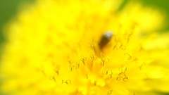 frame-000007 (Beaver-) Tags: macro dragonfly pickle tomato flower