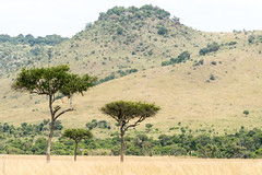 _DSC4095.jpg (wim_tavernier) Tags: africa transmara kenya