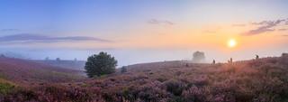 Panorama of Memories to #heathfeaver 2017