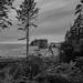 Ruby Beach Trail-3