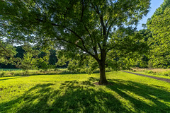 Web Frelinghuysen Arboretum (mtschappat@verizon.net) Tags: frelinghuysen arboretum new jersey sony a6500 1018 lens zone system express