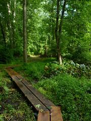 Boardwalk trail (Dendroica cerulea) Tags: boardwalk trail path forest wetlands summer irelandbrookconservationarea eastbrunswick middlesexcounty nj newjersey