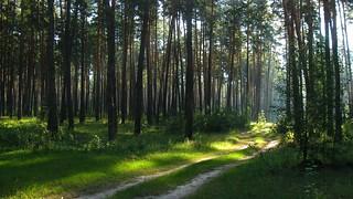 A forest fairy tale. 08/13/2018 Lebedin. Ukraine.