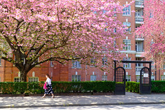 Spring flowers, a dash of pink and polka dots. (dagboshoots) Tags: london maidavale polkadots polka dots spring flowers pink street dagboshoots dagbo