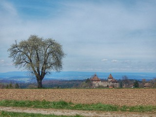 Kyburg Castle and tree