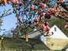 L16_01209 (MikeHeck) Tags: malvern pennsylvania unitedstates us