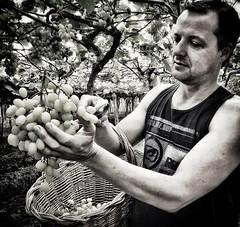 agricultor (jakza - Jaque Zattera) Tags: homem trabalhadorrural agricultor uva colheita pb