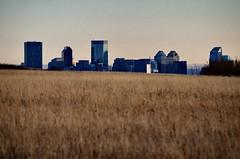 Downtown Tower Peeking Above Nose Hill (Bracus Triticum) Tags: downtown tower peeking above nose hill calgary カルガリー アルバータ州 alberta canada カナダ 12月 december winter 2017 平成29年 じゅうにがつ 十二月 jūnigatsu 師走 shiwasu priestsrun
