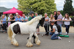 Gabriel on Parade (meniscuslens) Tags: pony piebald foal colt photographer crowd horses hounds heroes charity trust aylesbury princes risborough high wycombe buckinghamshire