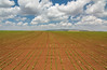 Green Beans HDR (Yovel Rodoy) Tags: hdr grean beans clouds ground nature landscape natureandnothingelse natural yellow green tokina 1116 frame picture blue sky israel israeli farm farming farmer farminglife landscapes land agriculture agri