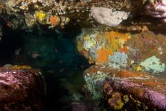 Bullseye cave (Marine Explorer) Tags: scuba nature marine underwater australia marineexplorer