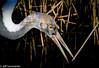Crane (Jeff Derbys) Tags: pensthorpe crane